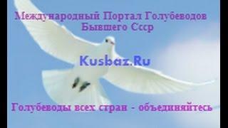 Голуби СССР.Советские голуби и голубеводы.