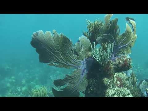 Living Reefs Foundation Coral Gardening