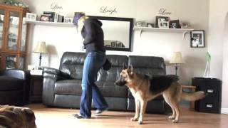 How to teach your dog to walk backwards.