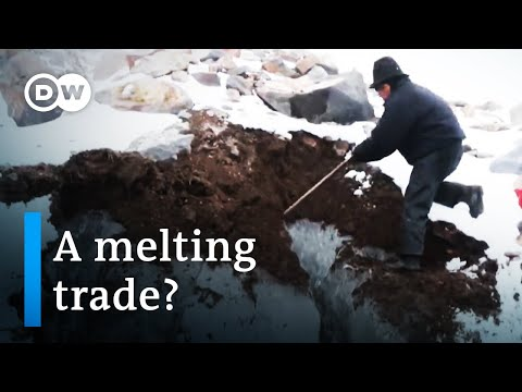 The ice merchant of Chimborazo | DW Documentary