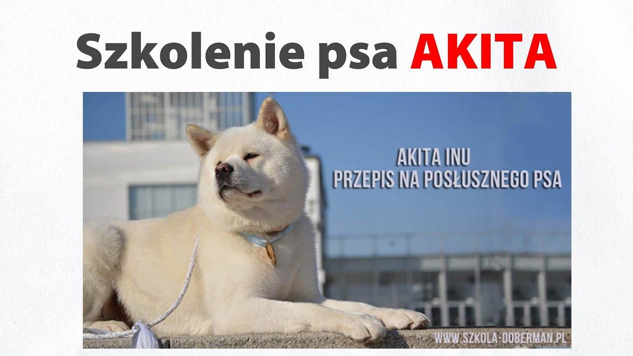 Bardzo dobryFantastyczny Pies Akita inu szkolenie, tresura, wychowanie szczeniaka i psa JU34