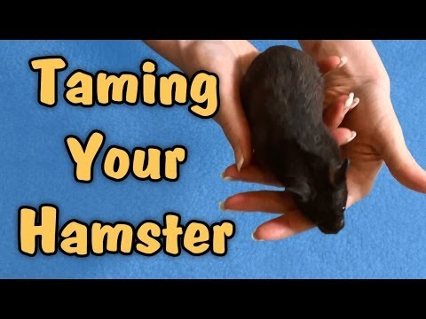 TAMING YOUR HAMSTER - Tips & Talk