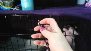 Puppy Essentials Haul & Crate Set-up