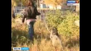 Укусила собака – виноват человек