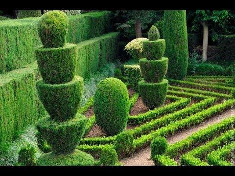 Тис - идеальный кустарник для формировки и изгороди. Можно стричь как хочешь