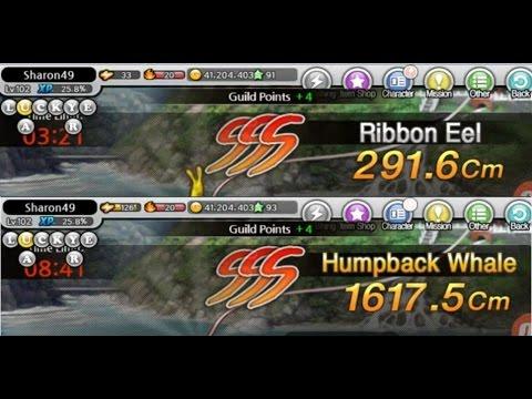 FISHING SUPERSTARS: RIBBON EEL CHALLENGE + HUMPBACK WHALE [26^01^2017]