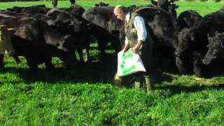 How we raise our grass fed free range beef