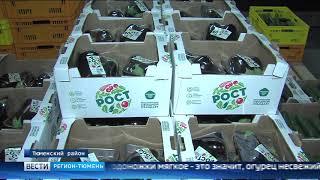 Производство баклажанов наладили в Тюменском районе