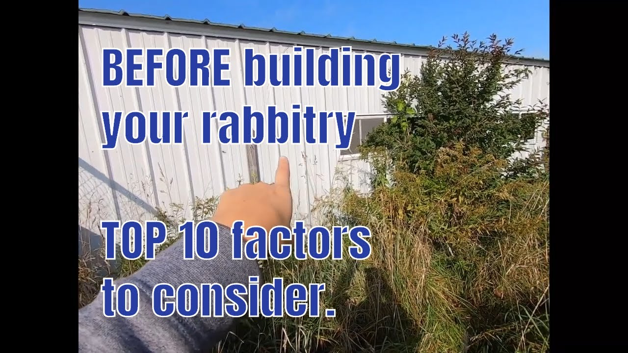 Building a rabbitry takes time and focus.