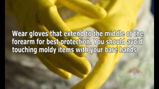 Precautions for Mold removal