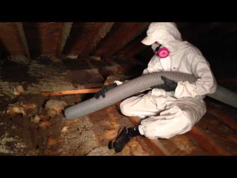 Removal of Blown In Attic Insulation ( Four Seasons Insulation )