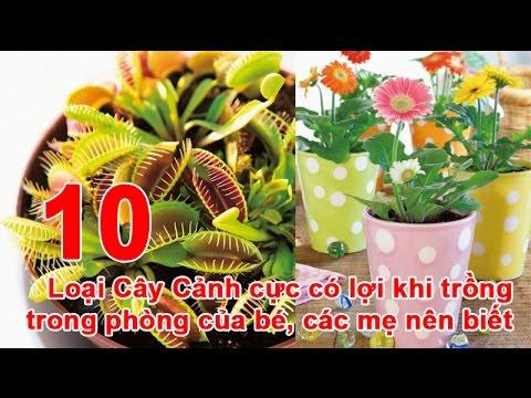 10 Loại Cây Cảnh cực có lợi khi trồng trong phòng của bé, các mẹ nên biết