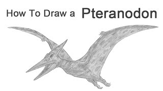 How to Draw a Pteranodon (Pterodactyl)
