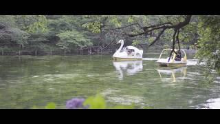 【吉祥寺】まるでモネの池?! 井の頭公園で動画撮影【α6300】