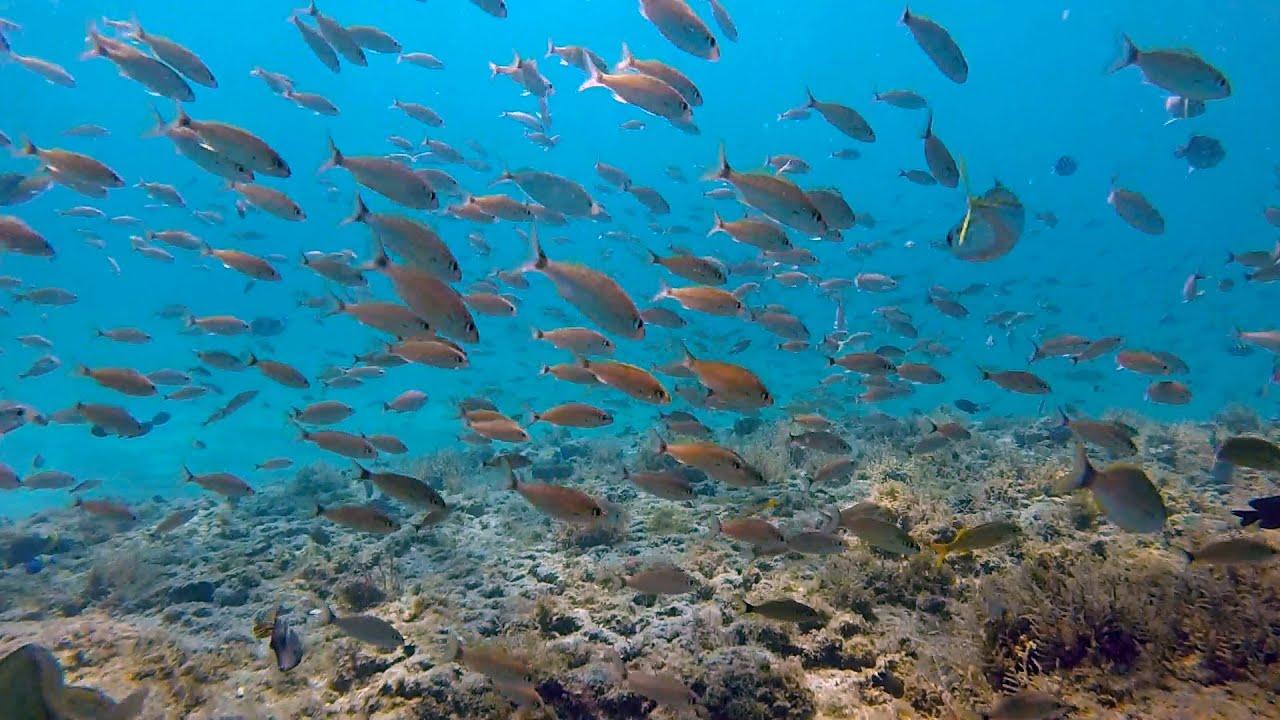 Delray Wreck | Delray Beach | SS Inchulva Wreck Dive Site ...