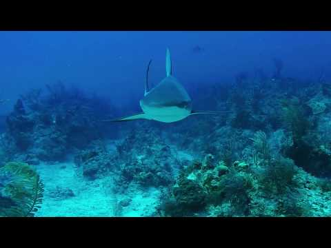 April, 2017 - Grand Bahamas Dive Trip