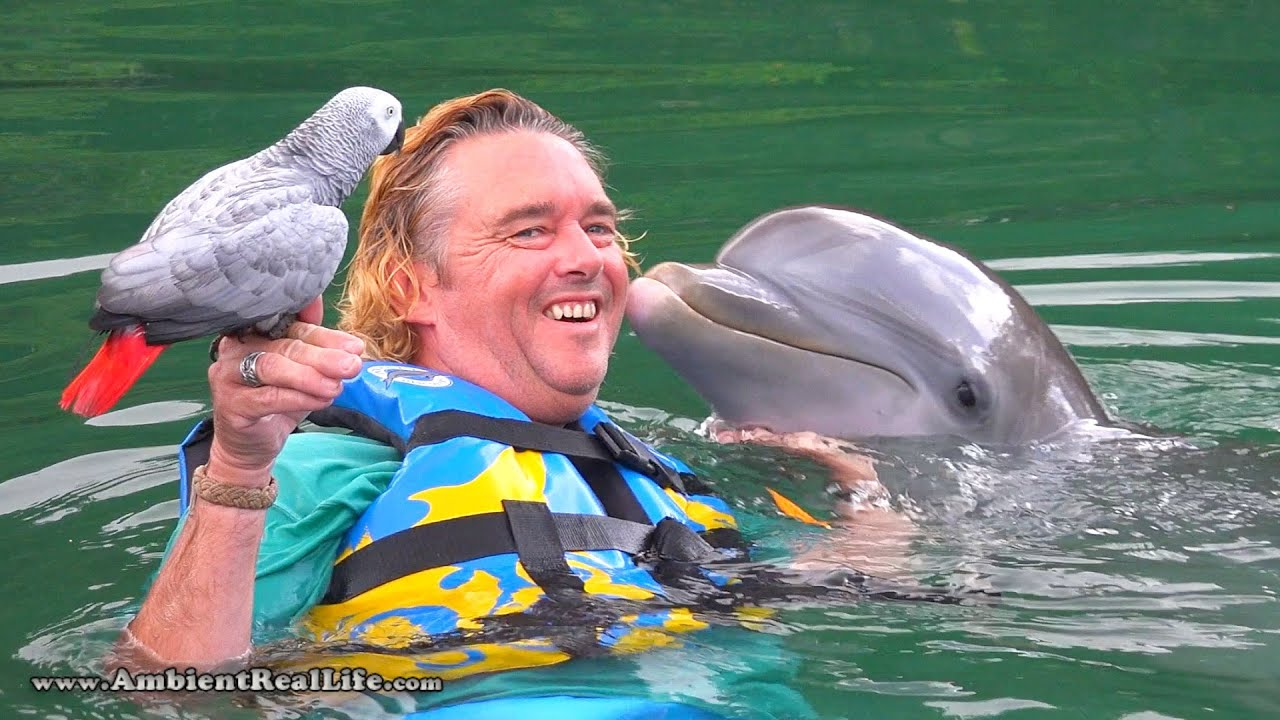 """Lucky"" the PARROT meets ""Venus"" the DOLPHIN!  In British Virgin Islands, Caribb"