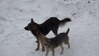 15 02 В Нижнем Тагиле жалоб на агрессивных бродячих собак становится меньше