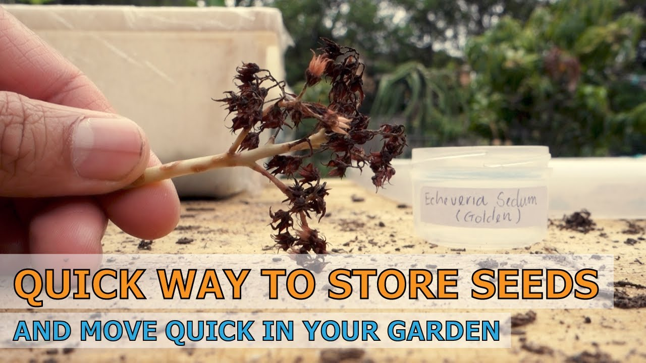 TẬP 50: QUICK WAY TO STORE YOUR SEED & MOVE FAST IN THE GARDEN | PLANT | SUCCULENTS #vlogging