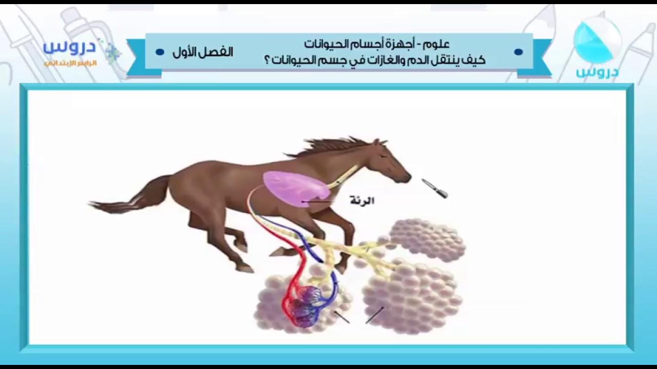 الرابع الابتدائي | الفصل الدراسي الأول 1438 | علوم | أجهزة أجسام الحيوانات (الدم والغازات) 1