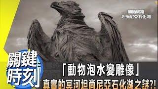 「動物泡水變雕像」真實的冥河坦尚尼亞石化湖之謎?!2013年第1675集 2200 關鍵時刻