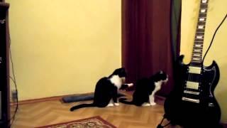 Приколы с кошками. Как коты на секс прибалтывают.