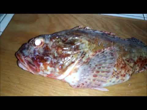HOW TO FILLET AND SKIN FISH (SCULPIN)