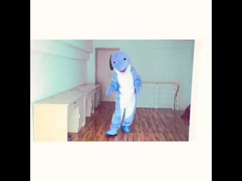Dolphin is lovely and smart Dress up the Mascot Costume
