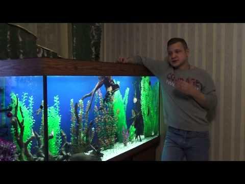 Аквариум дома. Все про аквариум
