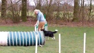 Repeat youtube video Behendigheid Hondenschool Alert