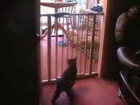 Failed Cat Jump