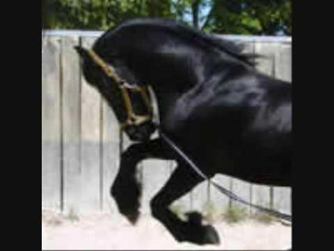 I tanti scopi per avere un cavallo youtube - Avere un cavallo ...