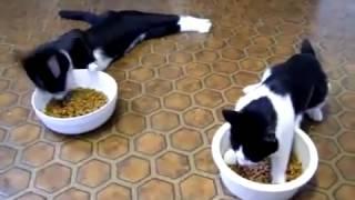 Коты после анестезии