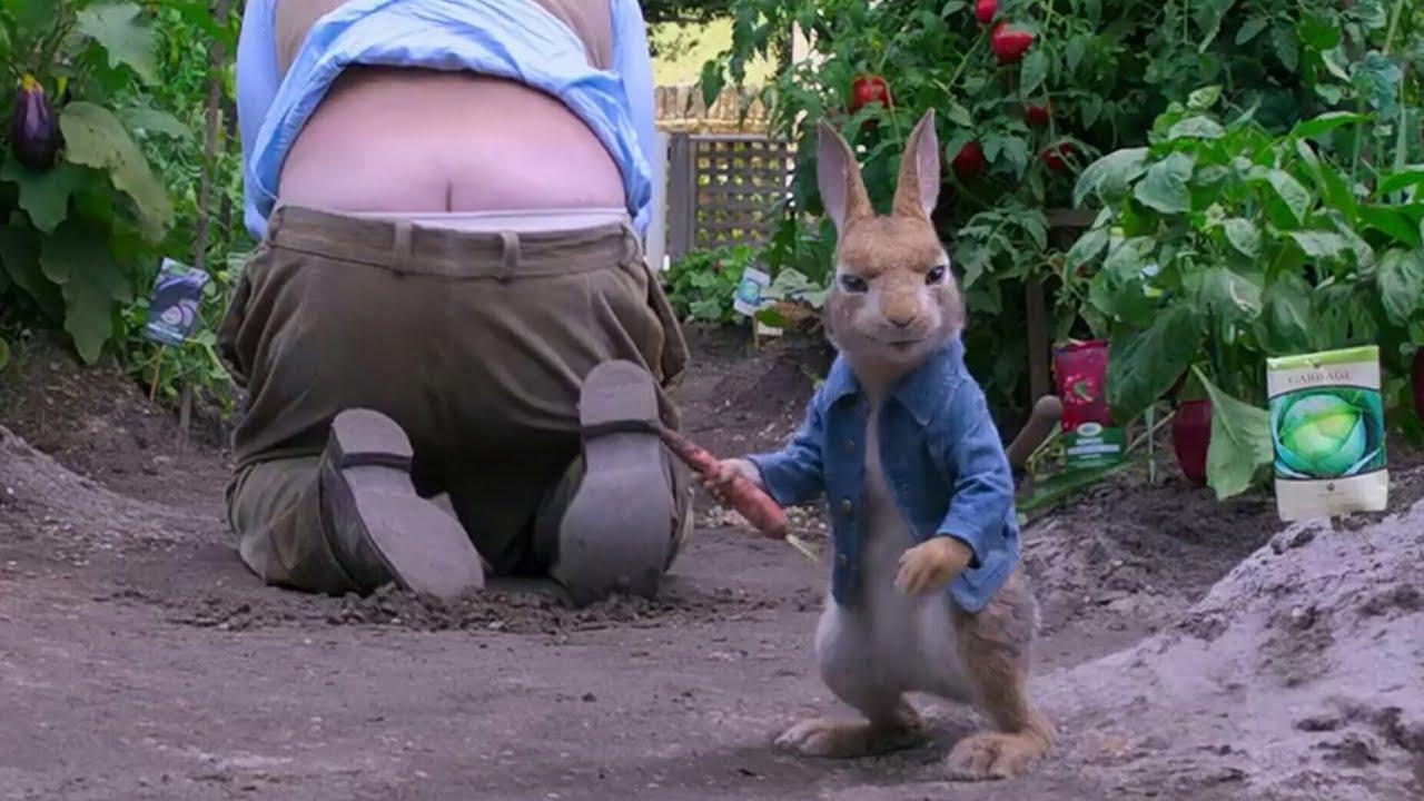 Download Peter Rabbit 2018 #2 Hindi urdu dubbed man vs Rabbit