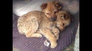 Щенки Ищут Дом. Замечательные щенки Джон и Джек ищут дом и любящих хозяев
