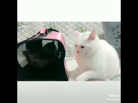 SMART  CATS 😆😆😆🙏🙏🙏💪💪💪