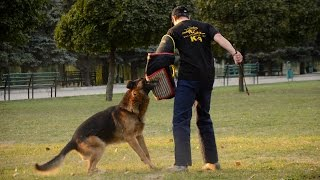 German Shepherd And Other Dogs Training With Professional Bite Sleeve