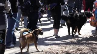 Soulard Mardi Gras Dog Parade 2014