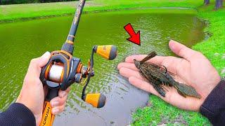 Catching GIANT Bass on BIG Jigs (Lake Fishing)