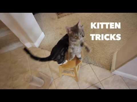 Kitten Tricks - Part 1