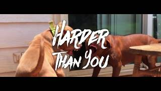 HMG SAPP - Harder Than You (music video)