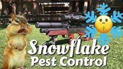 Snowflake Pest Control with the EDgun Leshiy and ATN X Sight 4K Pro