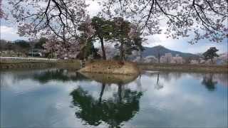 桜咲く(水仙の花もどうぞhttps://youtu.be/G5feN8rq8x4)