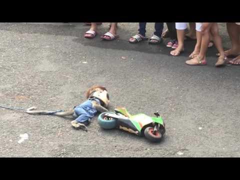 Walking Street Monkey Show, Surabaya