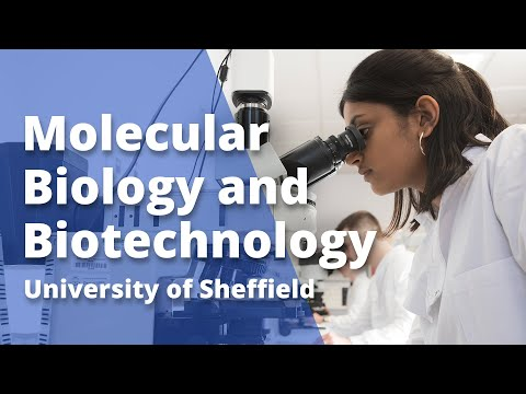 Undergraduate study in Molecular Biology and Biotechnology at Sheffield