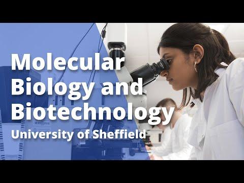 Molecular Biology And Biotechnology - University Of Sheffield