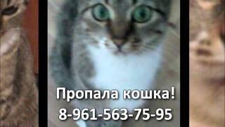 Потерялась кошка. 8.11.2013. Вятка Today