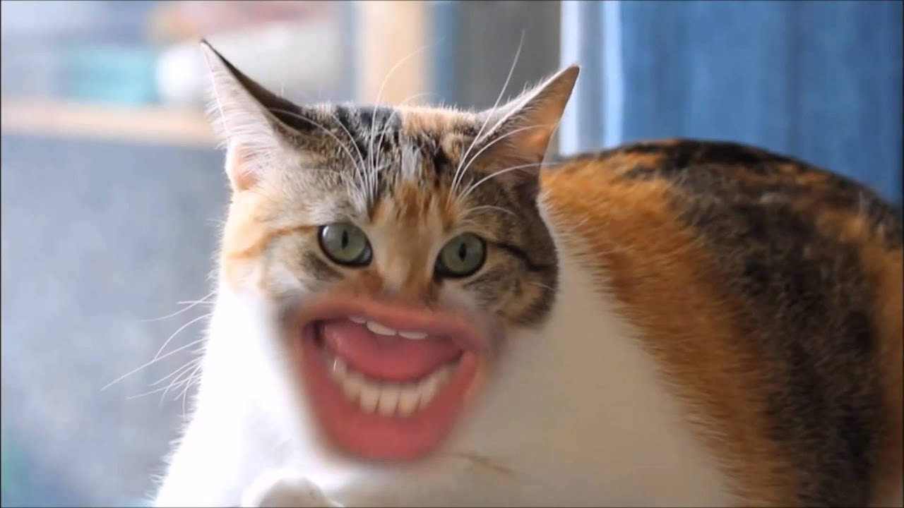 Markiplier MEOW At Different Speeds YouTube