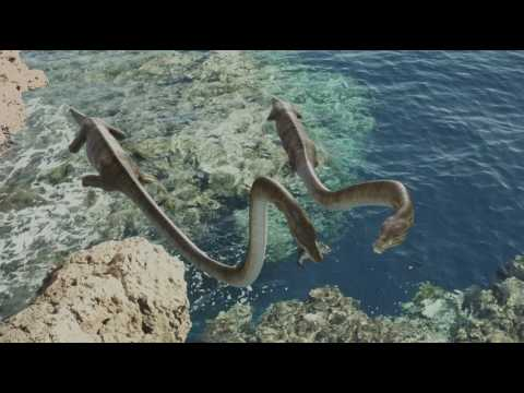Sea Rex  Journey to a Prehistoric World IMAX 2010 1080p x264 DTS KiNGDOM