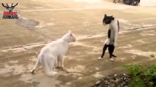 El gato de Michael Jackson /Bad